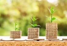 coins and plants representing investment growth